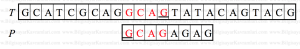 reverse_factoring_algo10