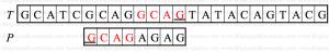reverse_factoring_algo7